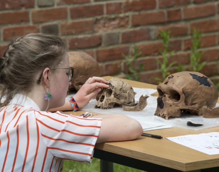 Student working on skulls