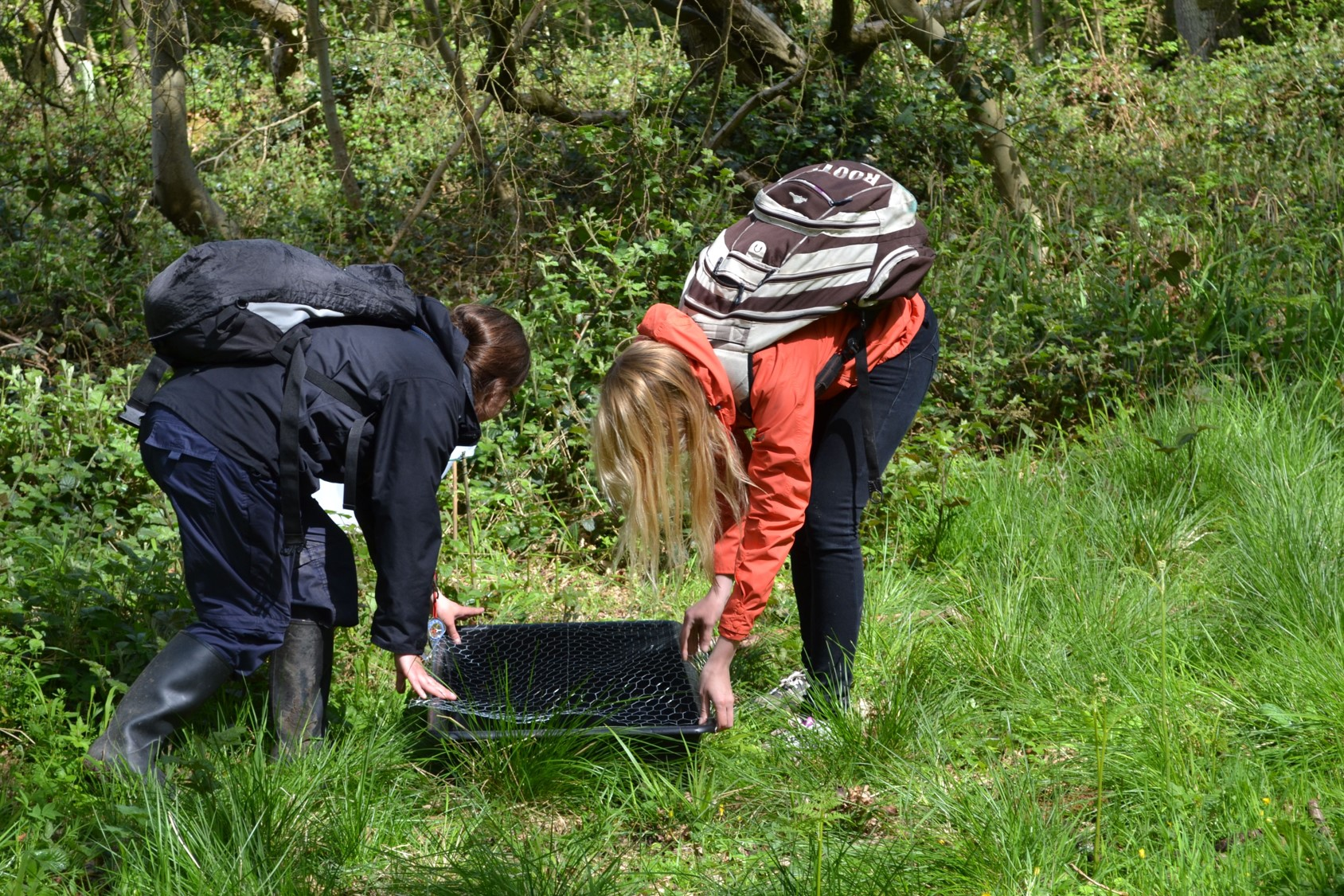 Two students wearing backpacks collecting quadrat data in a wooded area