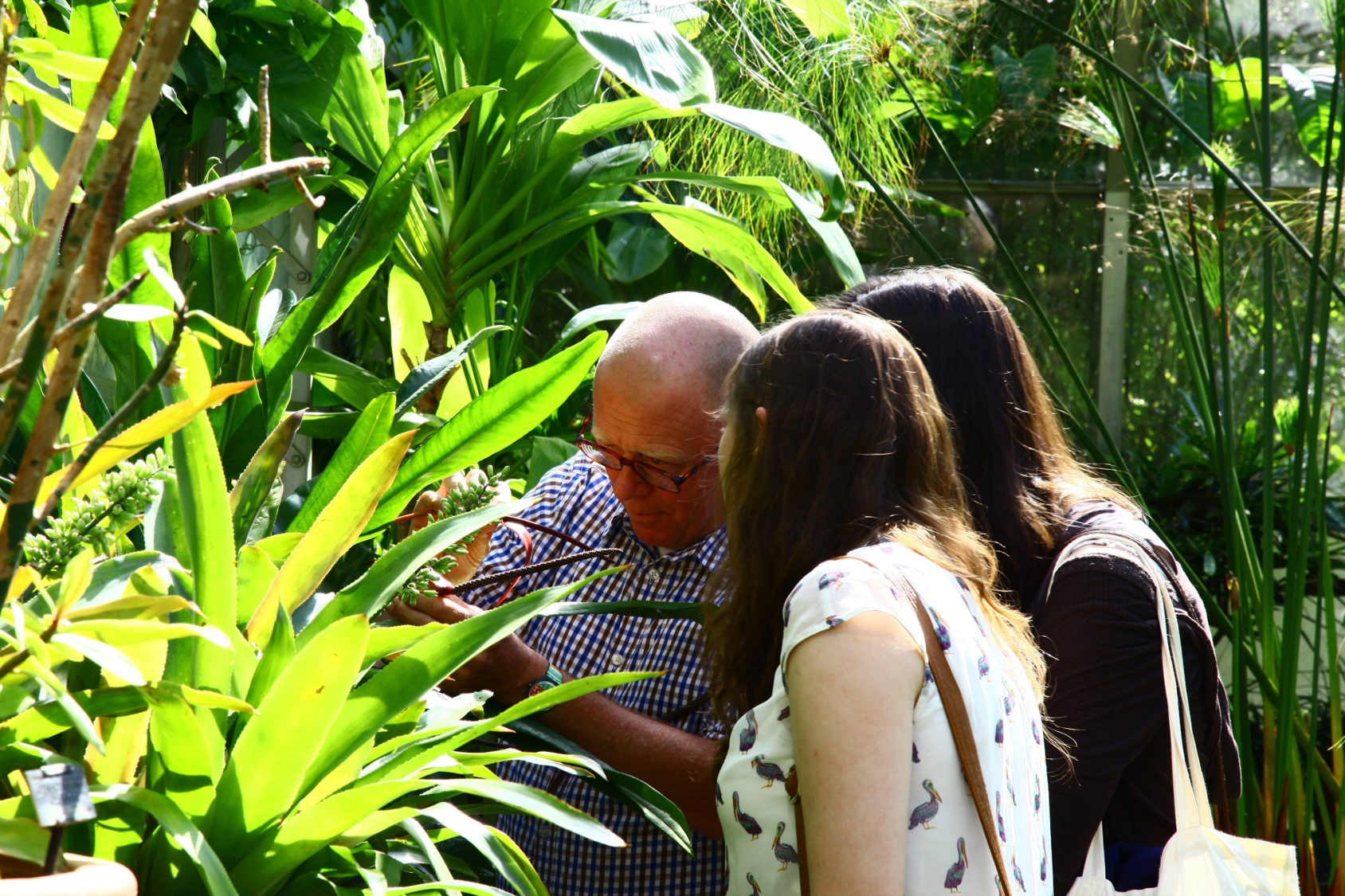 A tutor shows a plant to students in the Oxford Botanic Garden