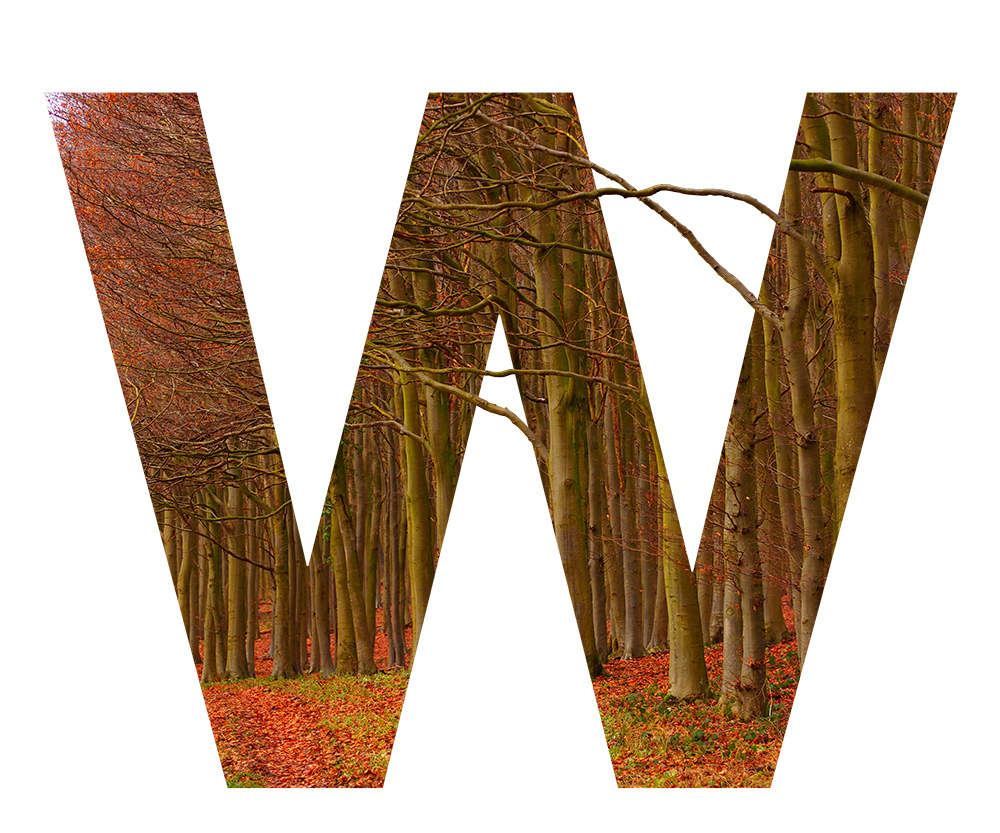 W is for Wytham Woods