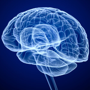 Brain structure may be root of apathy