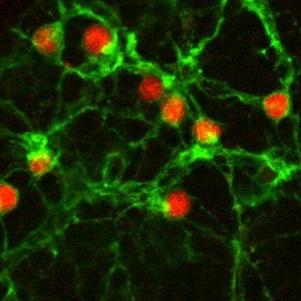 Gene therapy shows promise for reversing blindness