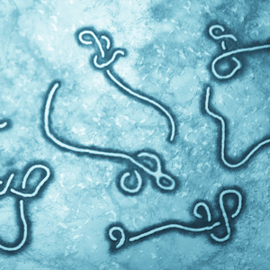 Ebola vaccine offers long-lasting immunity