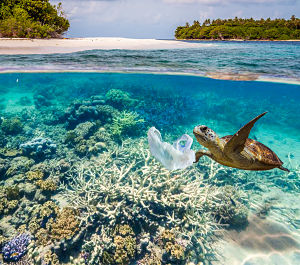 New rules urgently needed to protect our oceans