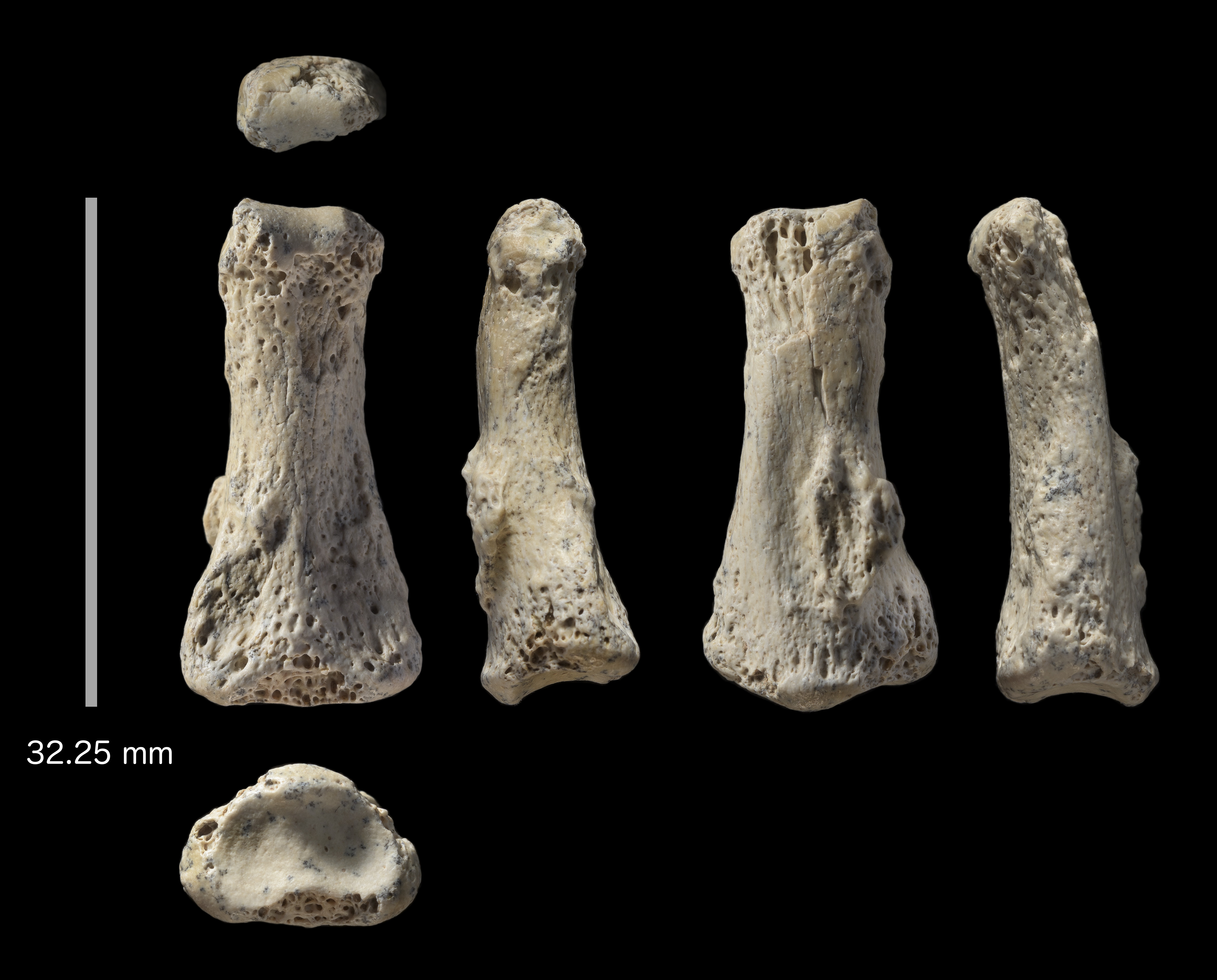 Ancient bones suggest first humans travelled further than we think
