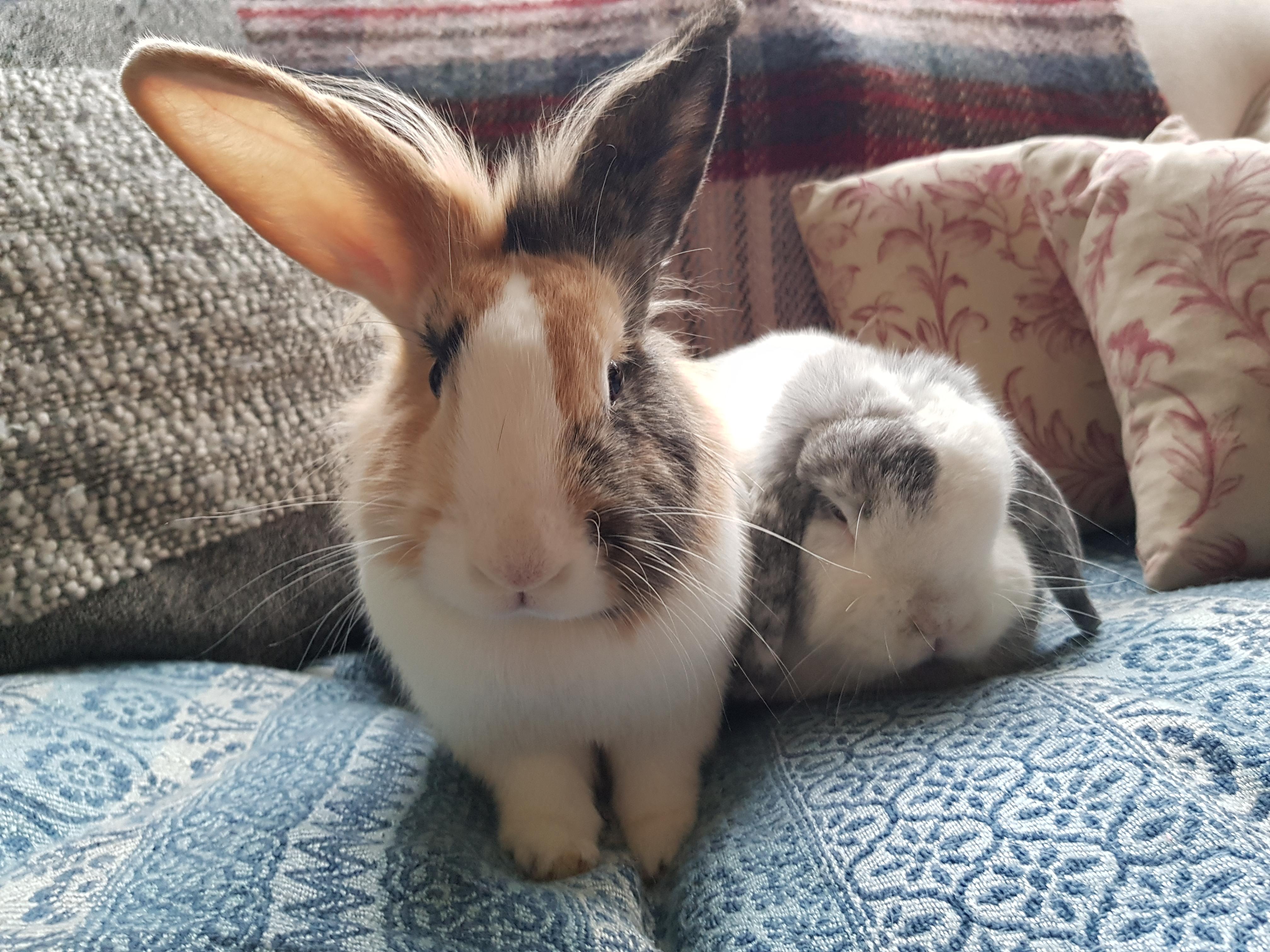 bunny dating uk)