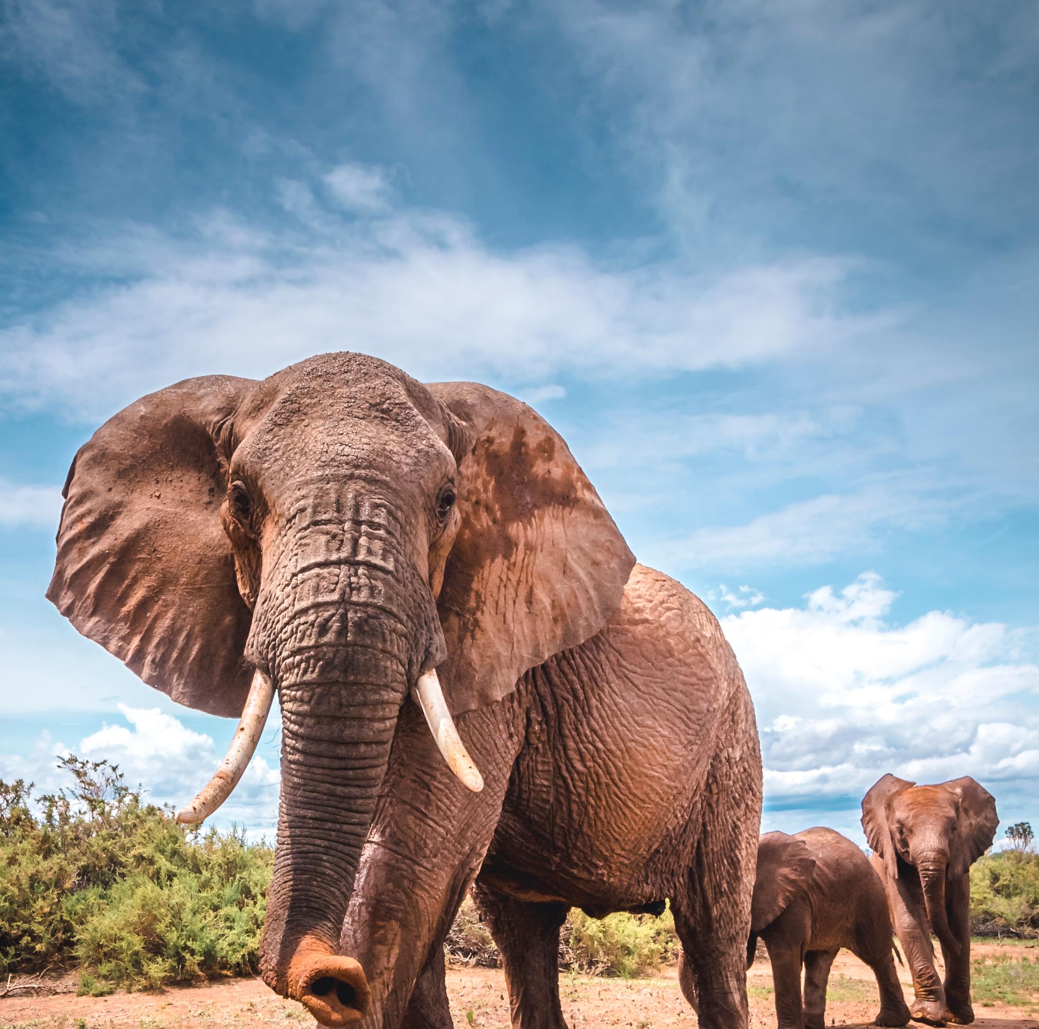 Feeling the beat through the elephant's feet | University of