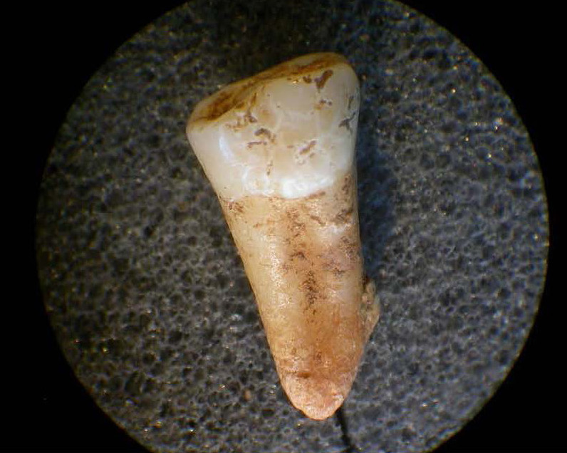 Ancient Britons' teeth reveal people were 'highly mobile' 4,000 years ago
