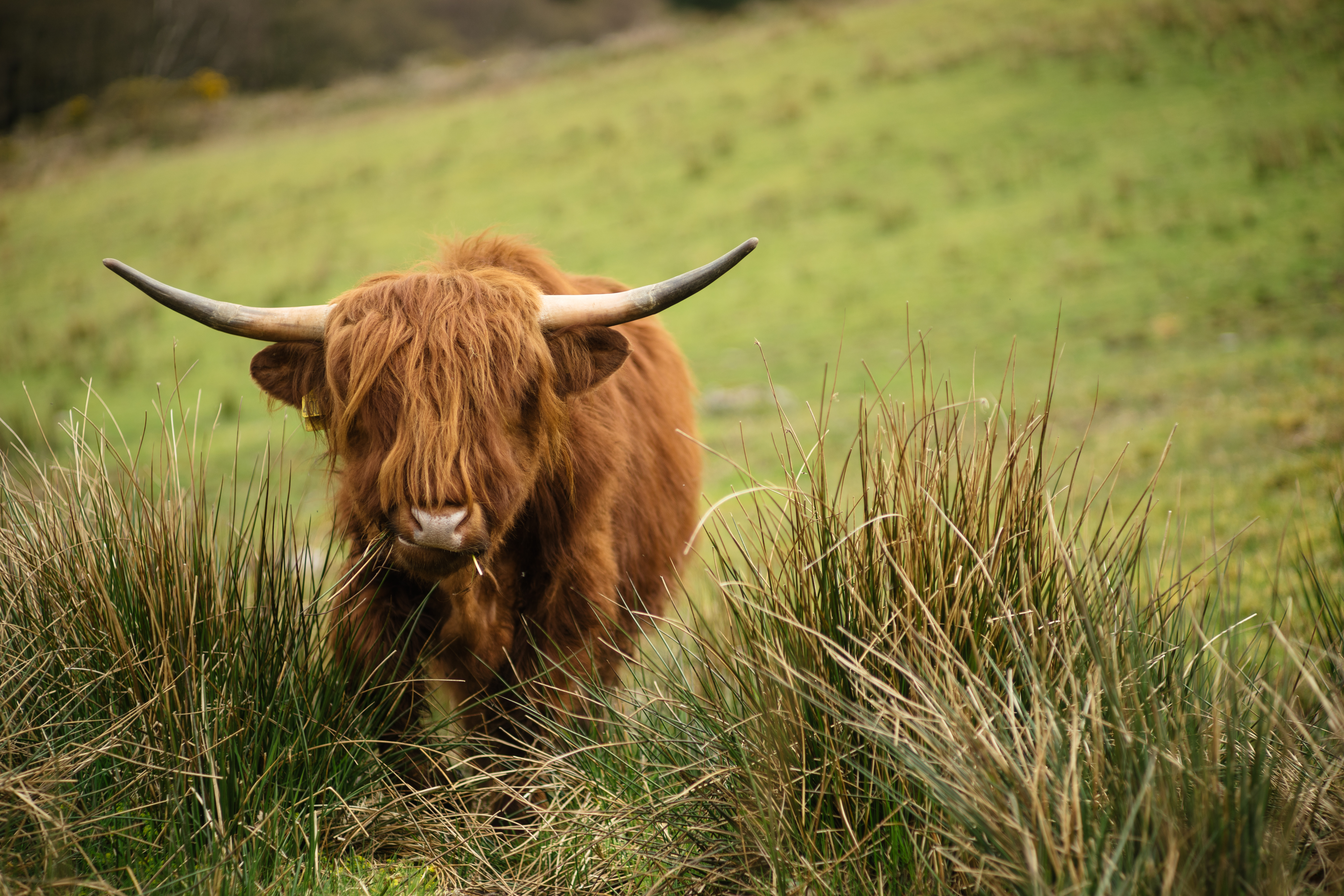 Is grass-fed beef good or bad for the climate?