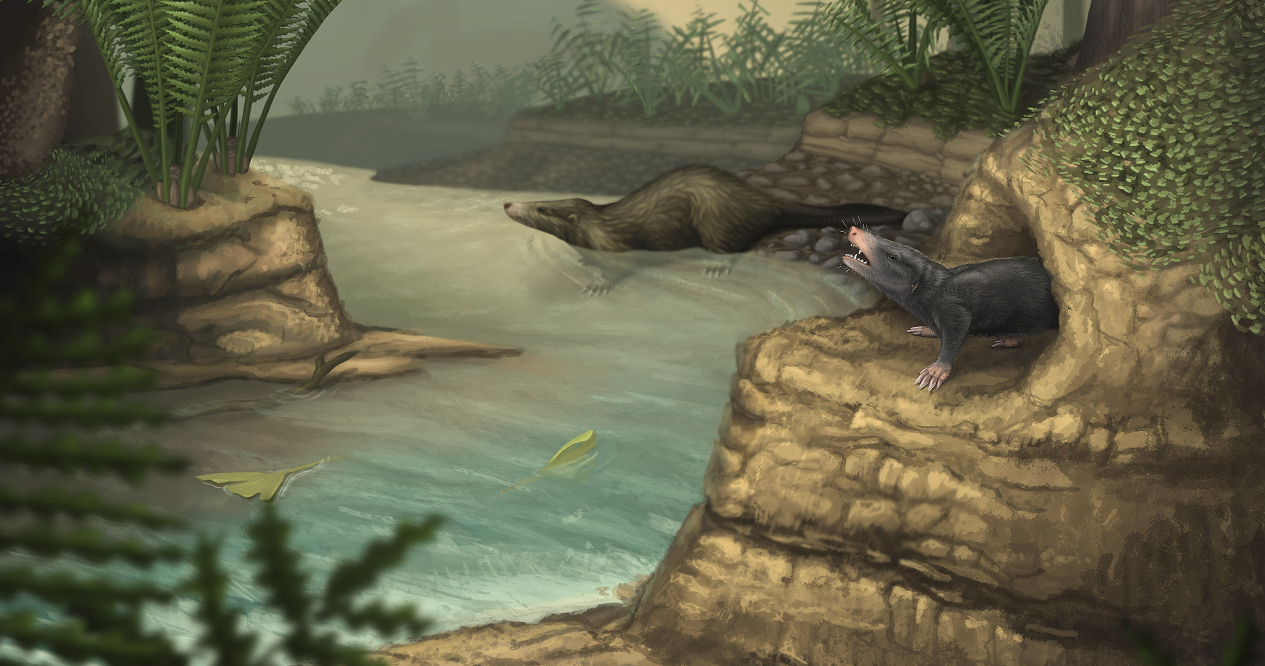 Jurassic saw fastest mammal evolution