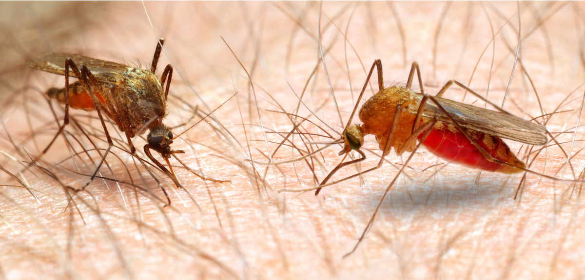 Getting rid of malaria possible, if we try something new