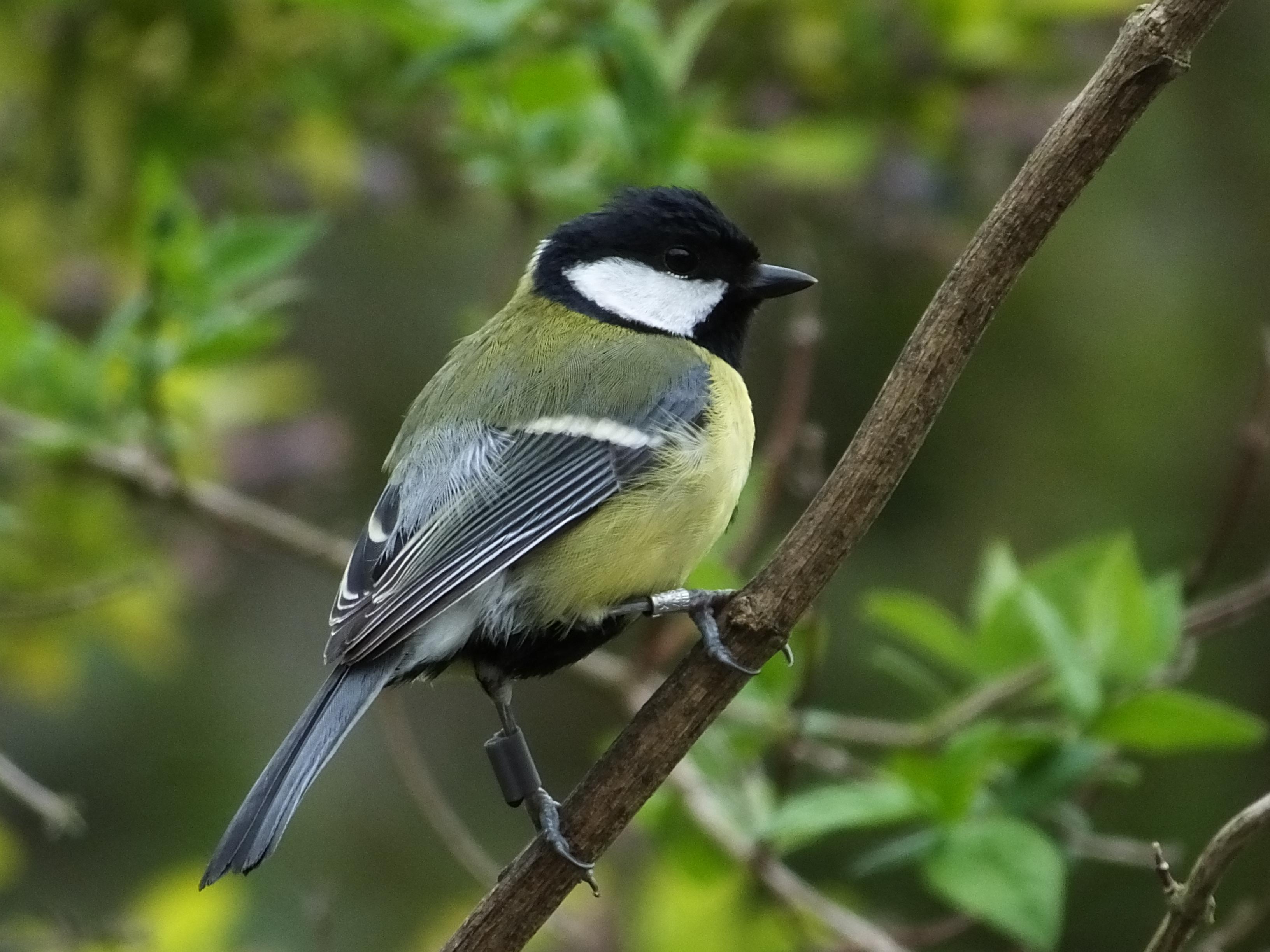 Birds choose spring neighbours based on winter 'friendships'