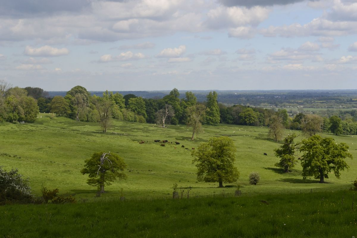 Woodland concerns put into historical context