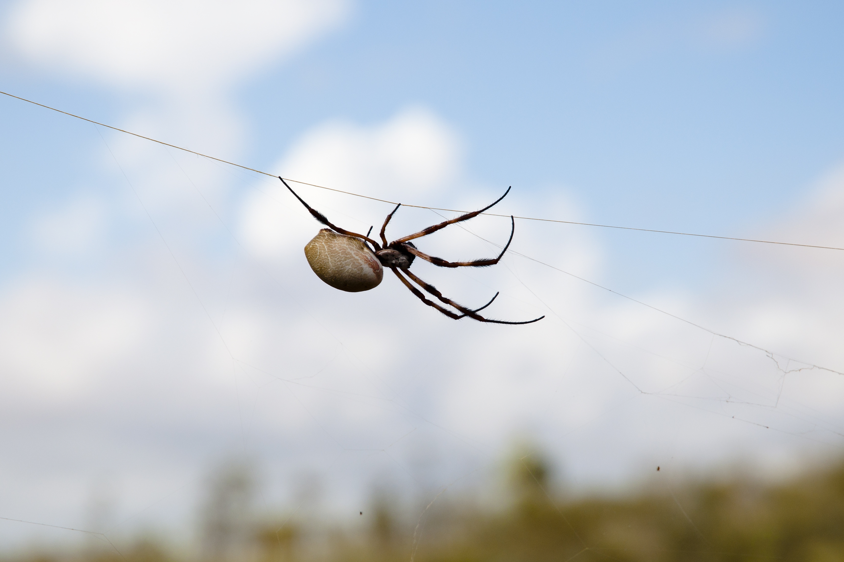 Spider silk: nature's bio-superlens