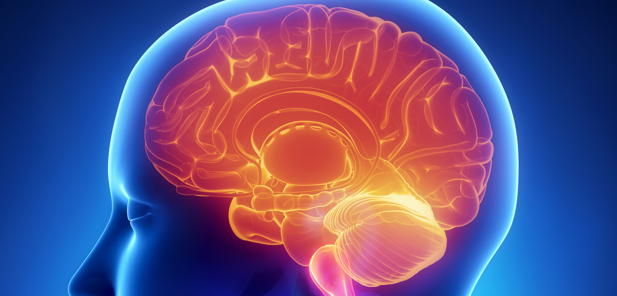 What makes the brain tick so fast?