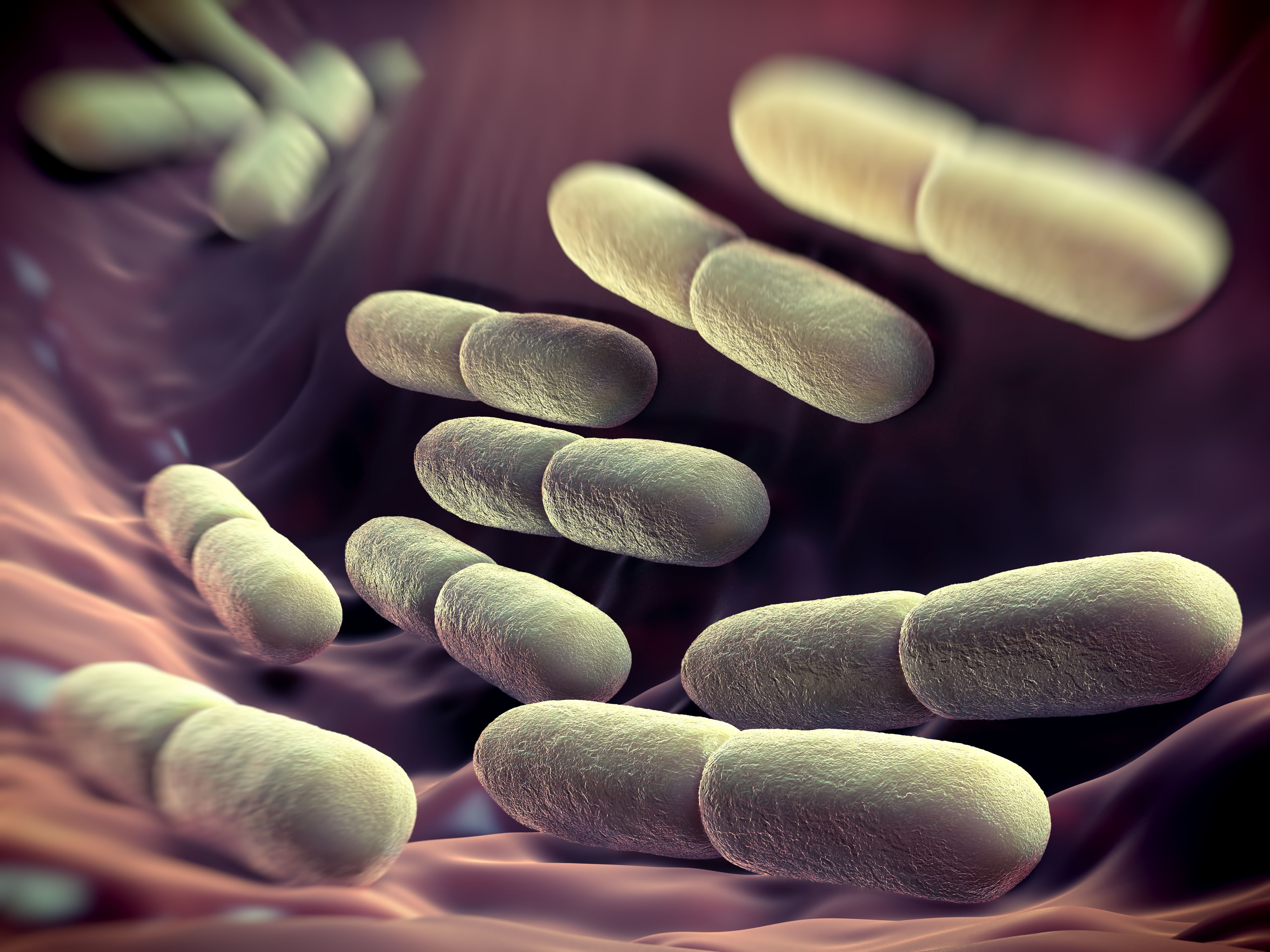 Competition between 'good bacteria' important for healthy gut, say researchers