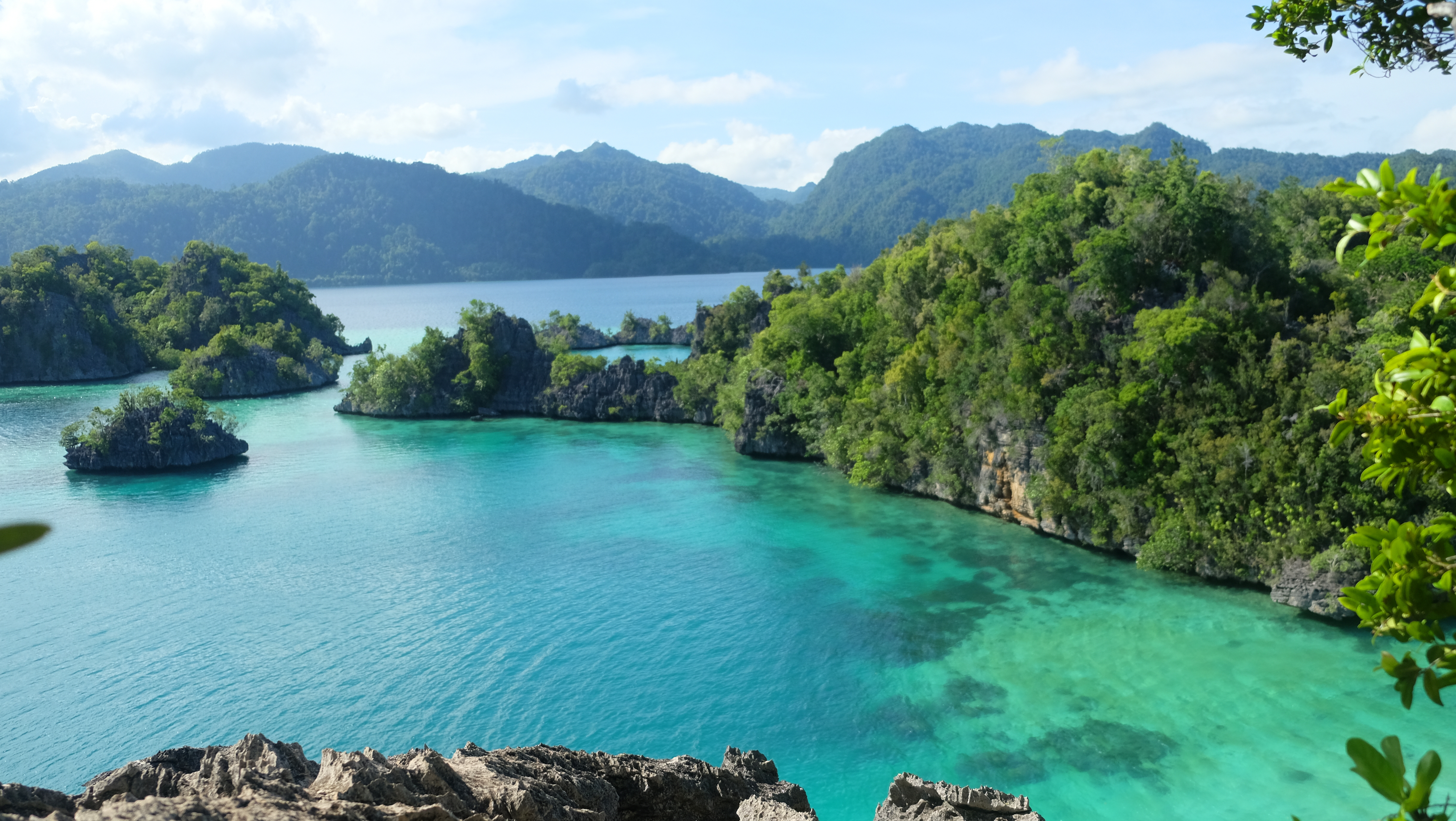 Wildlife haven of Sulawesi much younger than first thought