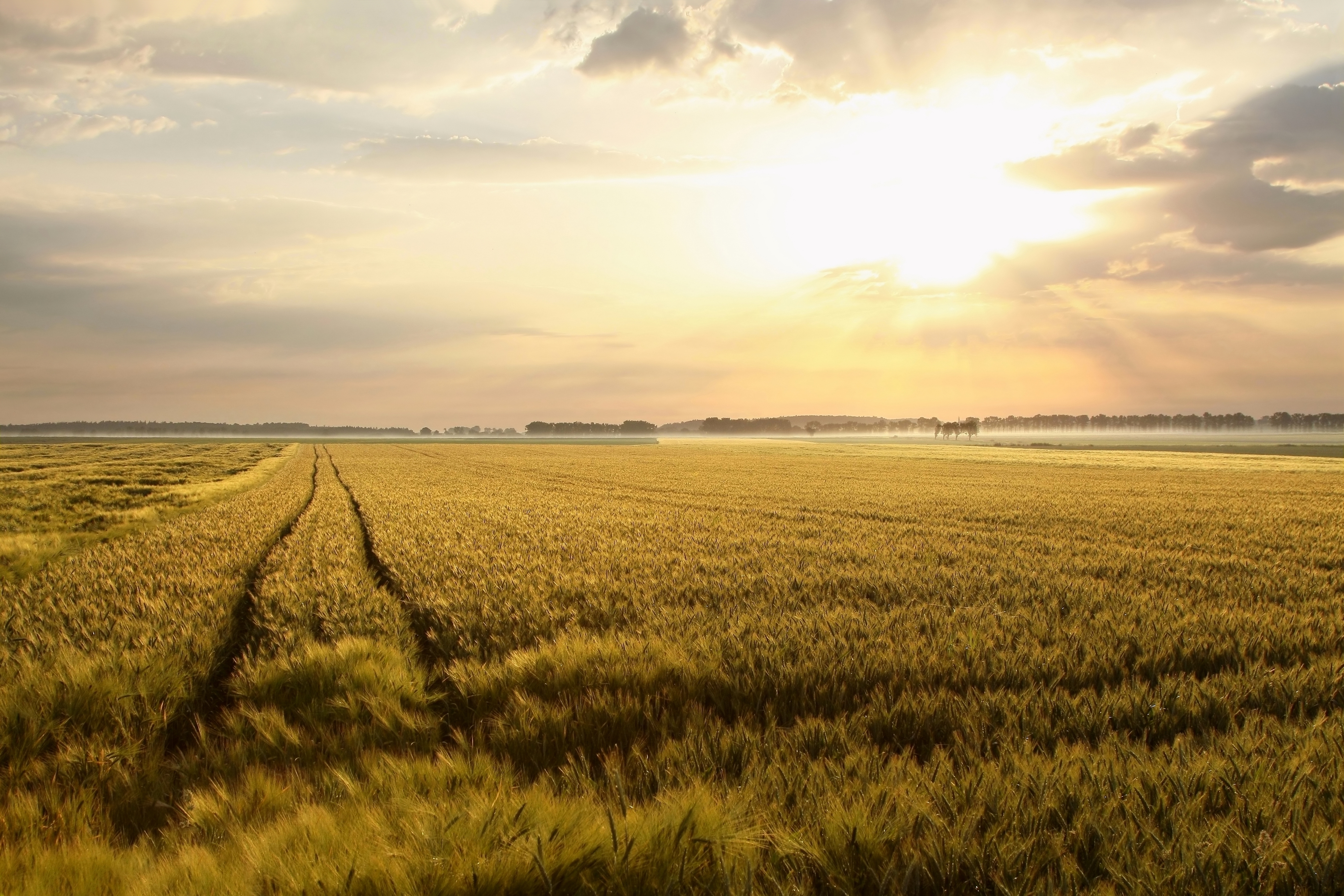 Study lays out effects of climate change on food production and health