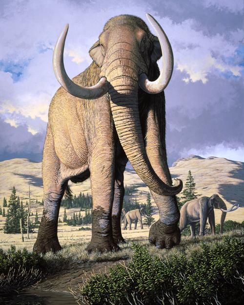 A Columbian mammoth