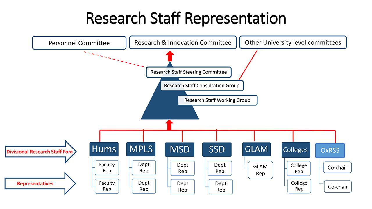Research Staff Representation diagram