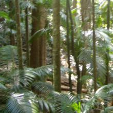 Fungi's role in policing the rainforests has been revealed