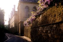 Wisteria on Queen's Lane