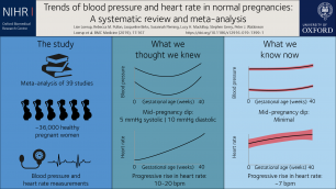 Heart rate rise and blood pressure drops during pregnancy are not as dramatic as previously thought