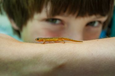 Boy holding a small newt
