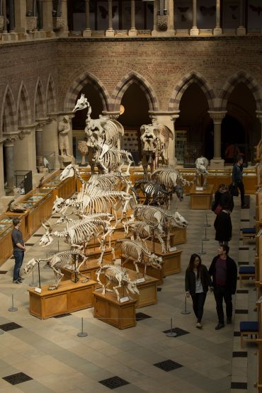 Skeletons inside the Oxford University Museum of Natural History