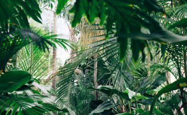 The Peruvian rainforest, by Chris Abney, Unsplash.