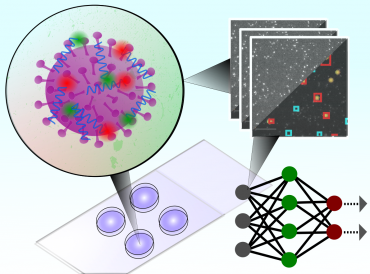 Graphical illustration of how the test uses a convolutional neural network to classify microscopy images of single intact particles of different viruses