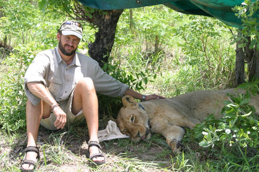 Andrew Loveridge with GPS collared lioness