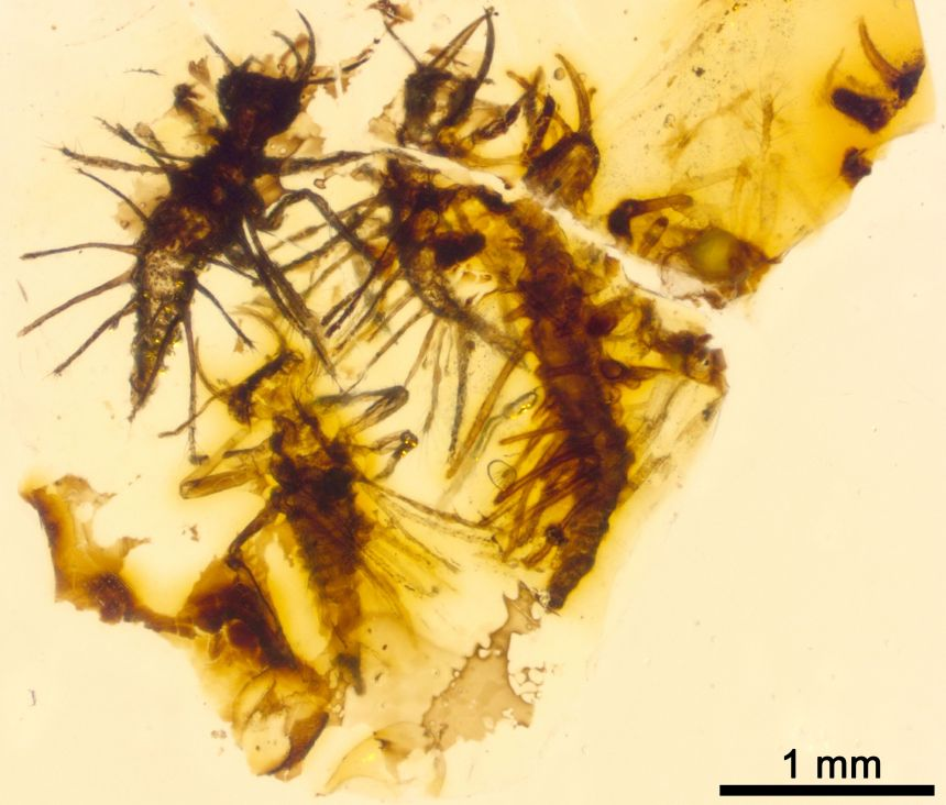 Newborn insects trapped in amber