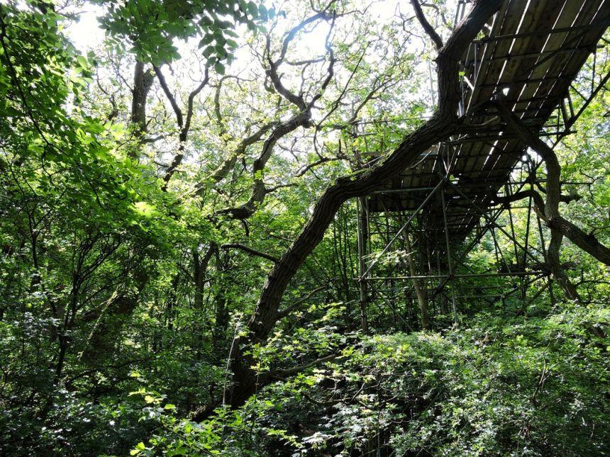 Wytham canopy