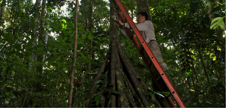 Researcher in the Amazon