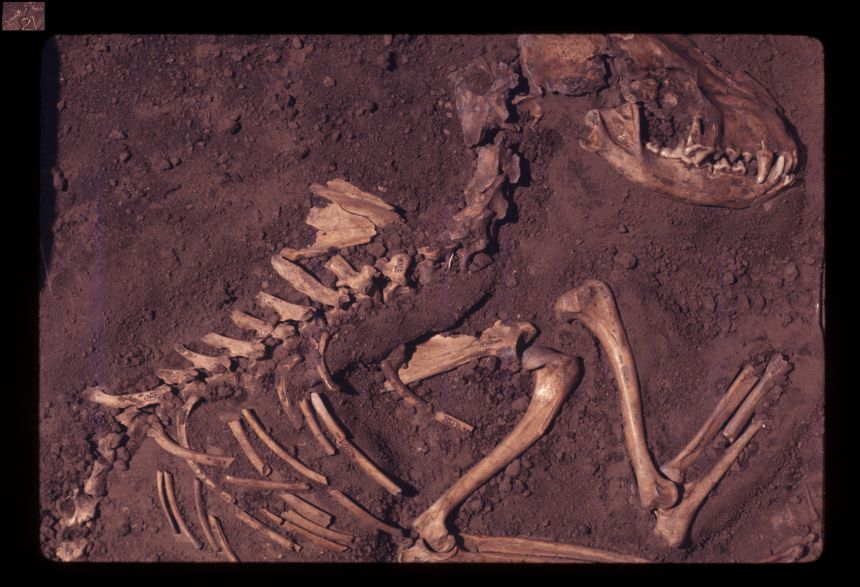 Image credit: Del Baston, courtesy of the Center for American Archaeology