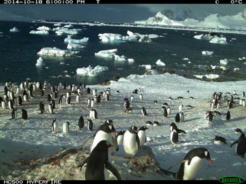 Remote cameras monitor colonies across Antarctica