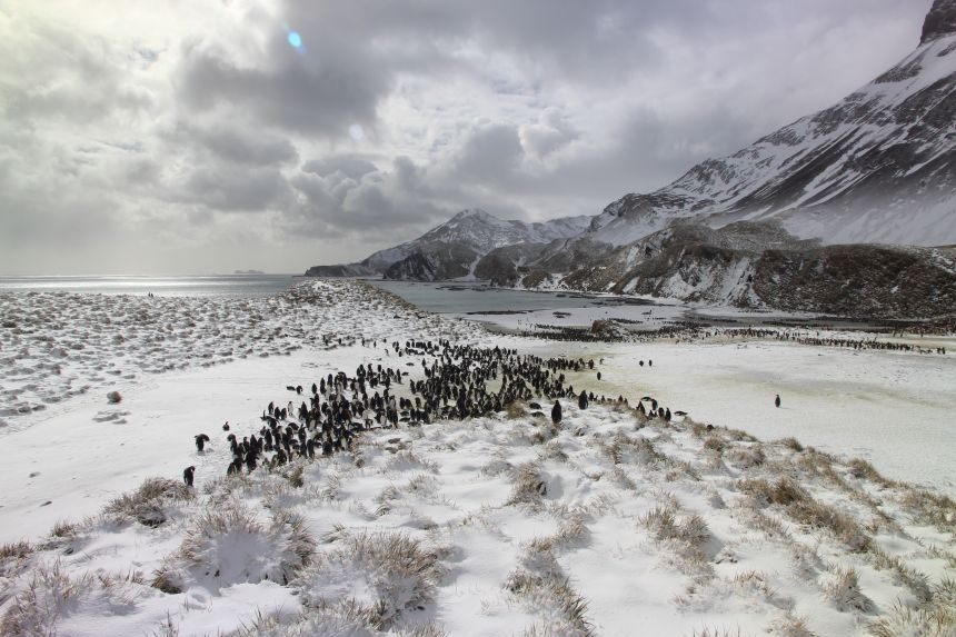 The 500,000 new images are from a year of penguin watching