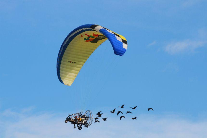 A powered parachute leading ibis