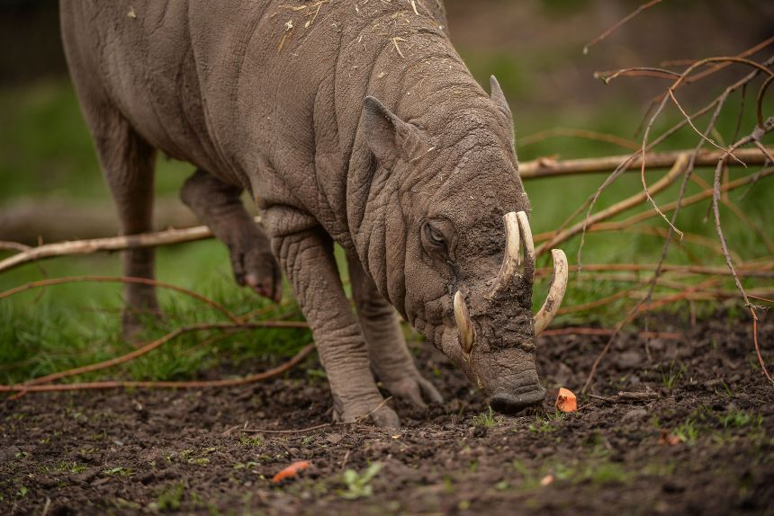 Image credit: Alex Knight, Chester Zoo