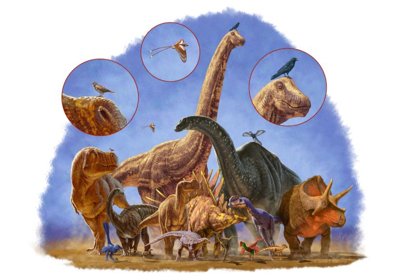 Dinosaurs evolved into a huge range of shapes and sizes over 170 million years