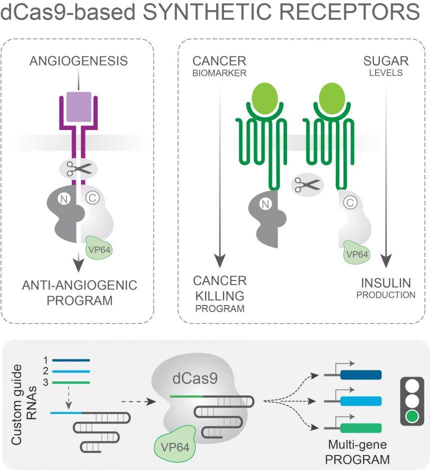 Disruptive bioengineering