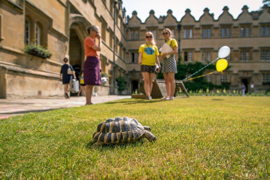 University College tortoise
