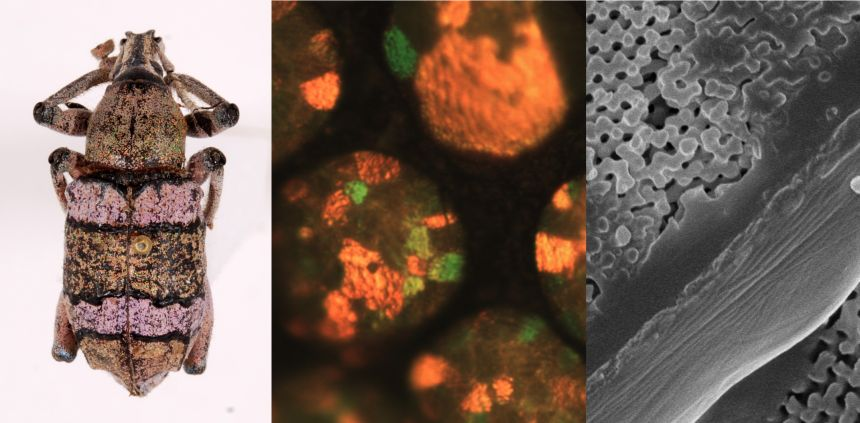 X-rays reveal the nanostructures the create structural colours
