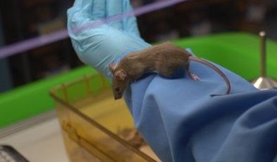 mouse being handled