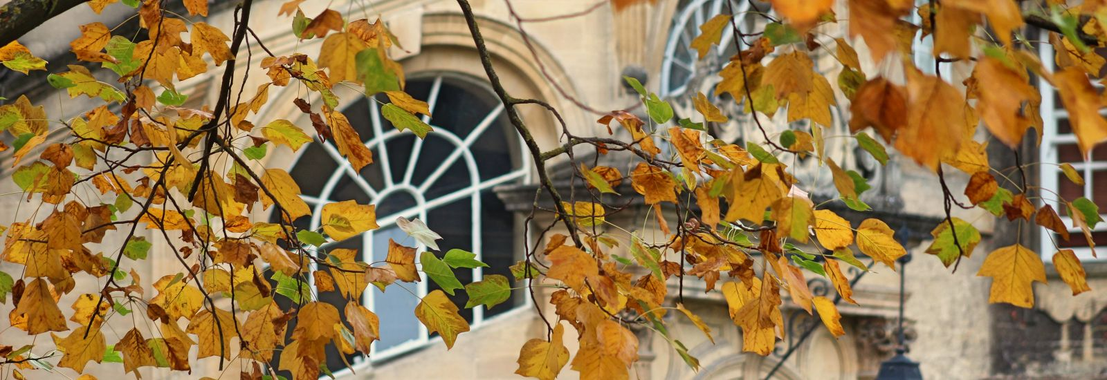 Orange leaves on a tree with a stone building behind