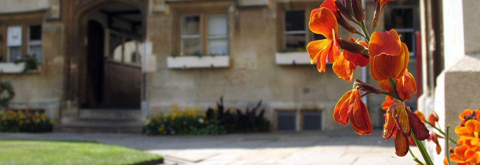 Close up of orange flowers in a quad