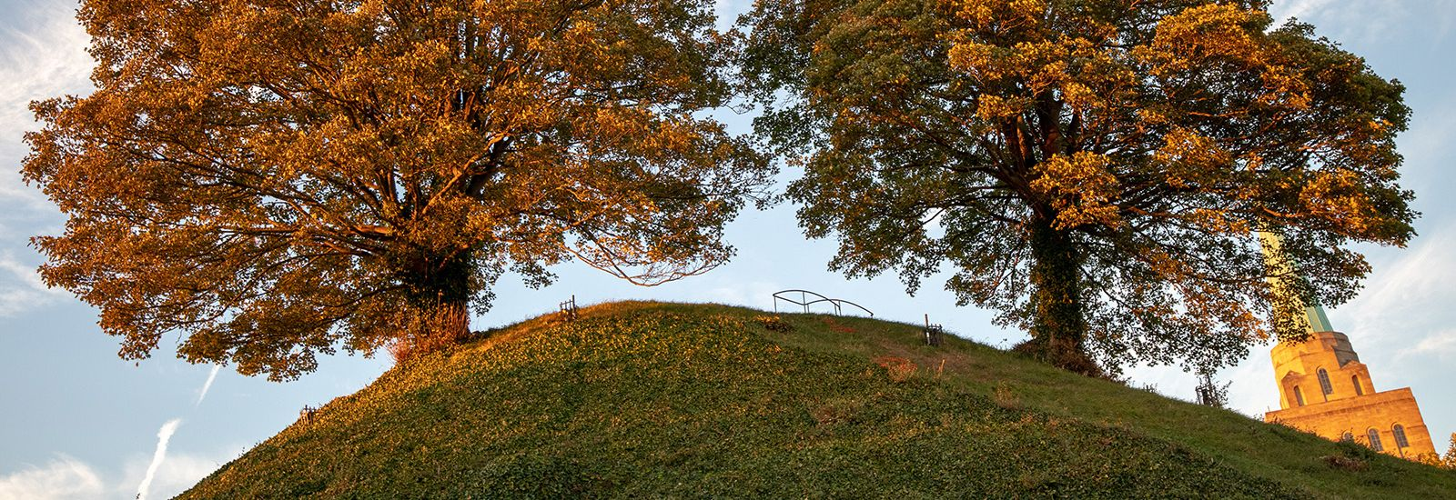 Two trees on a mound of grass