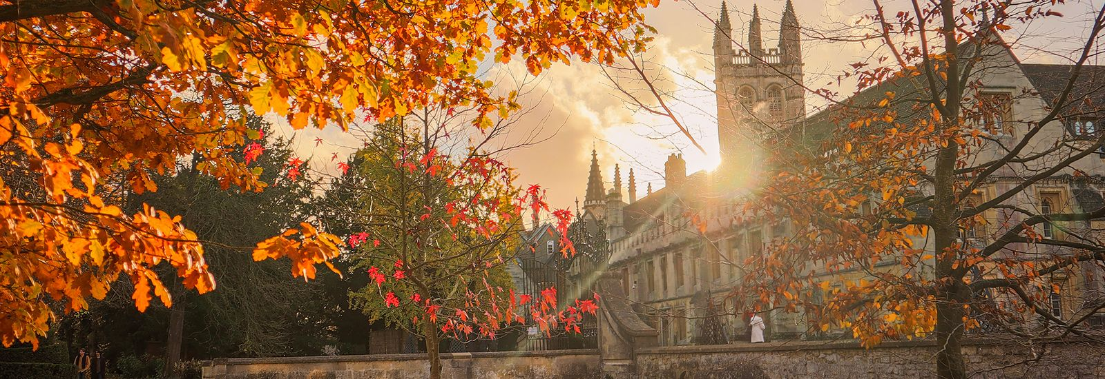 Autumnal trees at sunset in Magdalen College