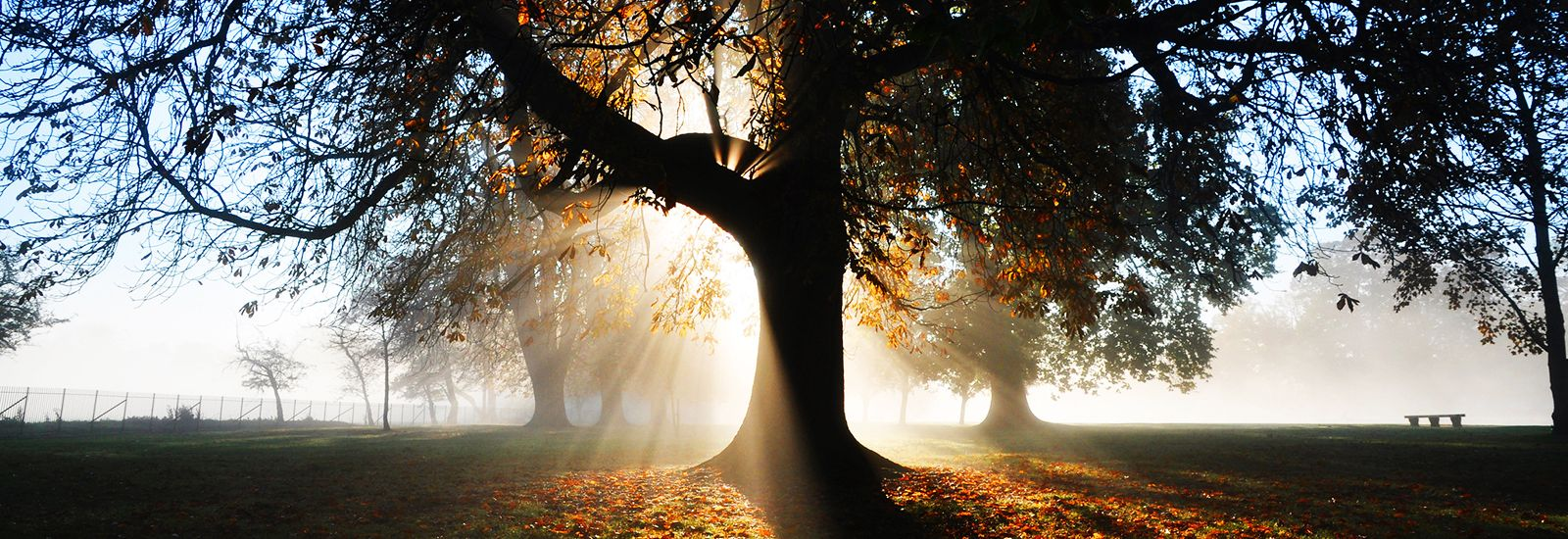 Sun rising behind a tree on a misty morning